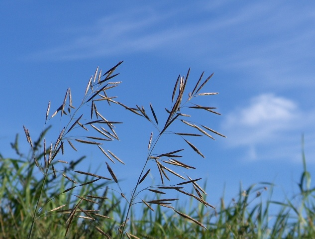 close up on tall grass and straw leaning over in the wind against a backdrop of cloud scattered blue sky.