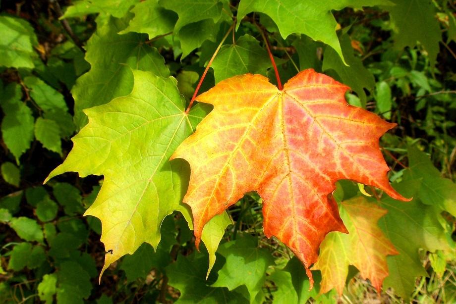fall_colours_